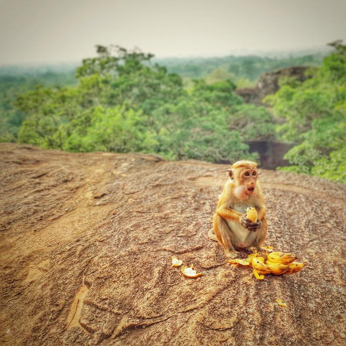 Bewohner von Sigiryia in Sri Lanka (c) planative.net