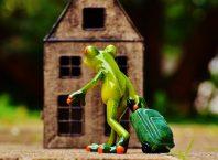 Die perfekte Packliste für dein Handgepäck ,vorausgesetzt du fliegst mit Check In Luggage