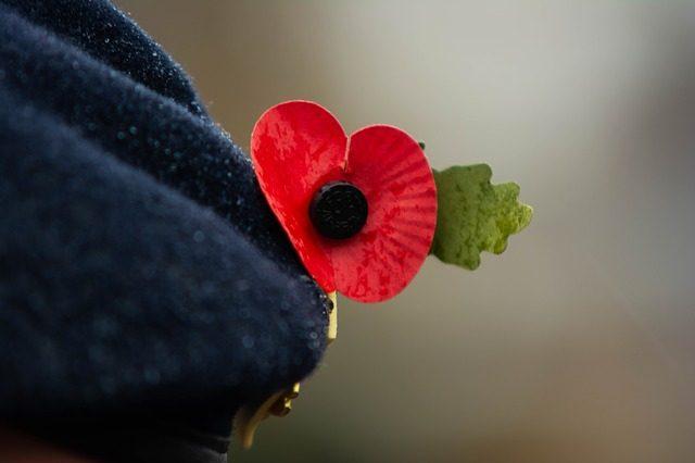 Mohnblume oder Poppy flower als Zeichen in Gedenken an gefallene Soldaten