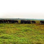 Elefanten in Sri Lanka - Minneriya oder Kaudulla Nationalpark?